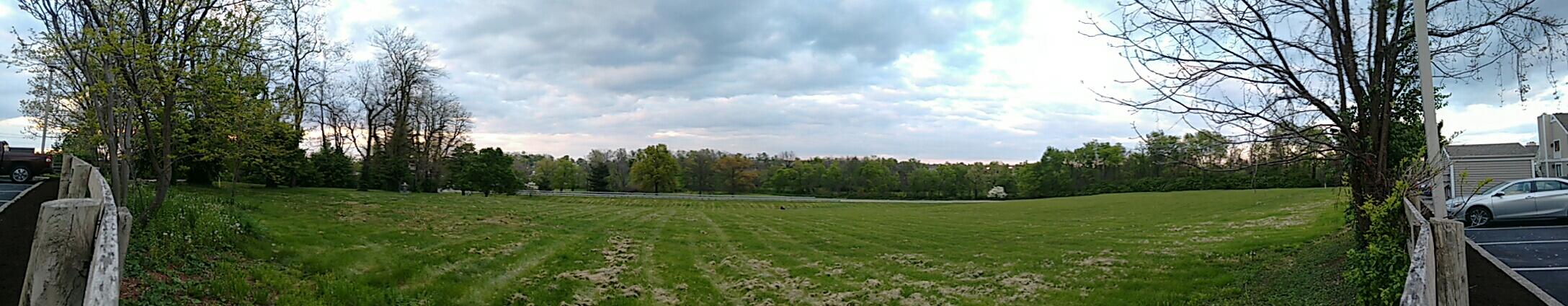 The grassy fields in spring